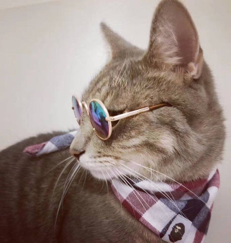 Sunglasses for cats and Dogs