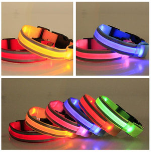 Illuminate LED  Dog Collar