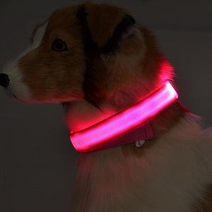 Illuminating Dog/Cat Collar