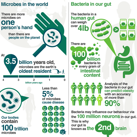 bacteria for gut health