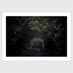 Limited Edition Print: Kat Gollock