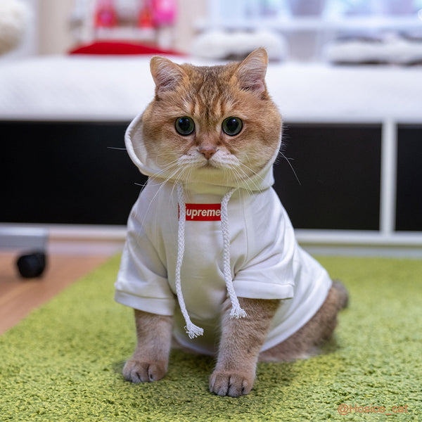 Pet Fashion T-shirt, Cat Clothes Cotton Vest /Hoodie Basic Apparel for Puppy(Hosico Same Style)