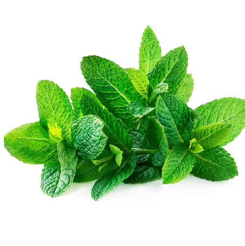 NATURAL PEPPERMINT EXTRACT