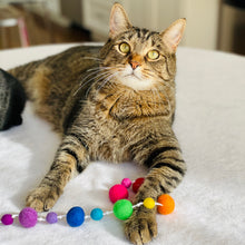 Load image into Gallery viewer, Rainbow Wool Ball Fishing Cat Toy