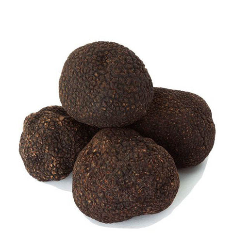 Fresh Black Winter Truffles 2oz ( Tuber melanosporum vitt ) - Urbani Truffles