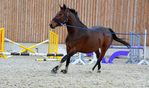 Is lunging an effective form of exercise???