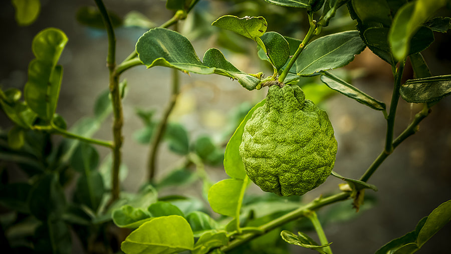 Is Bergamot Oil Good for Skin?