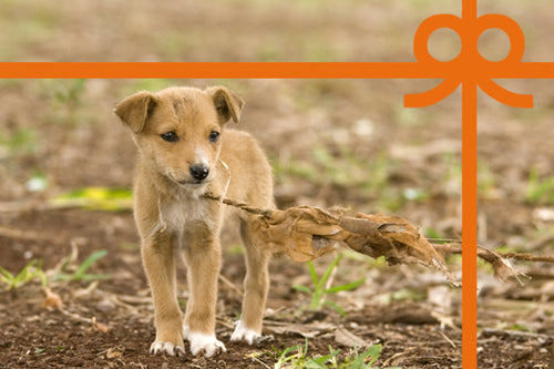 eCard: Save innocent dogs - World Animal Protection