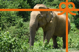 eCard: Stop elephant rides - World Animal Protection
