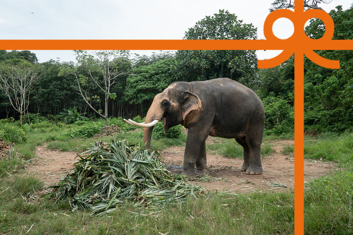 eCard: Give an elephant a treat