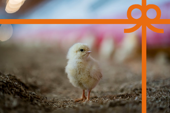 eCard: Give chickens a life - World Animal Protection