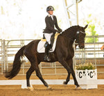 **SOLD** Remi DiCaprio | 6yo Hanoverian gelding Diamond Hit x Weltmeyer