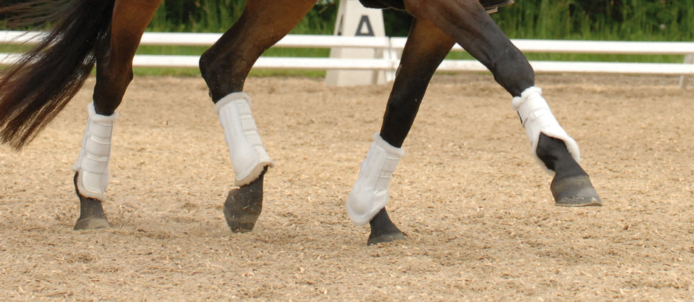 Load image into Gallery viewer, E.A.Mattes Professional Dressage Horse Boots Set of 4 Large - NextGen Equine