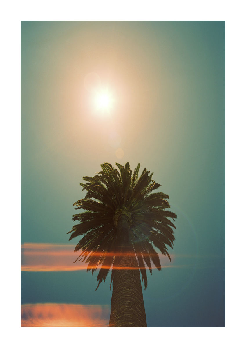 PALM TREE FLAIR - LOS ANGELES