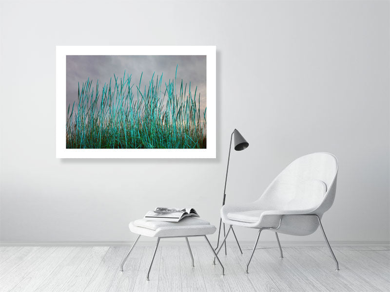 BLUE GRASSES - SCOTLAND