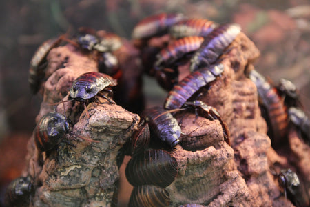 20 Things You May Not Know About Cockroaches! (#12 is HILARIOUS)