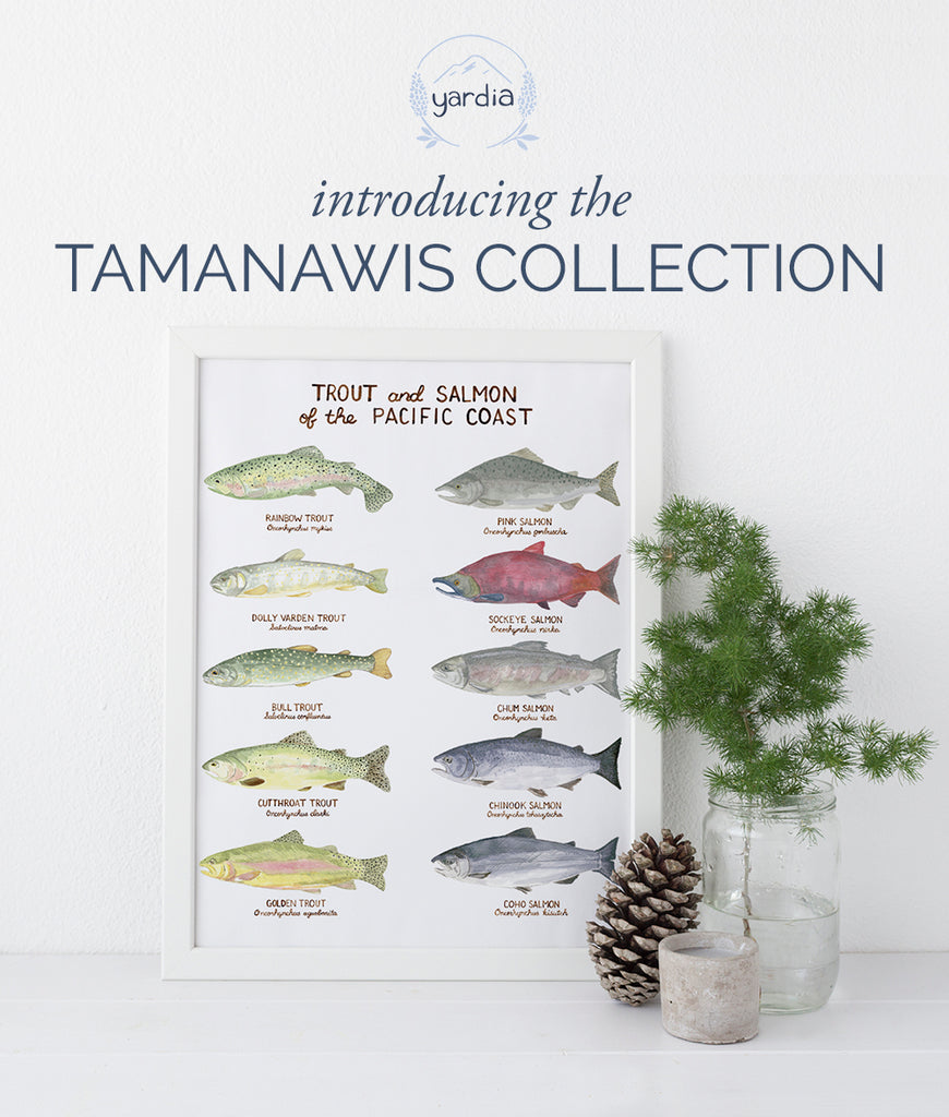Introducing the Tamanawis Collection
