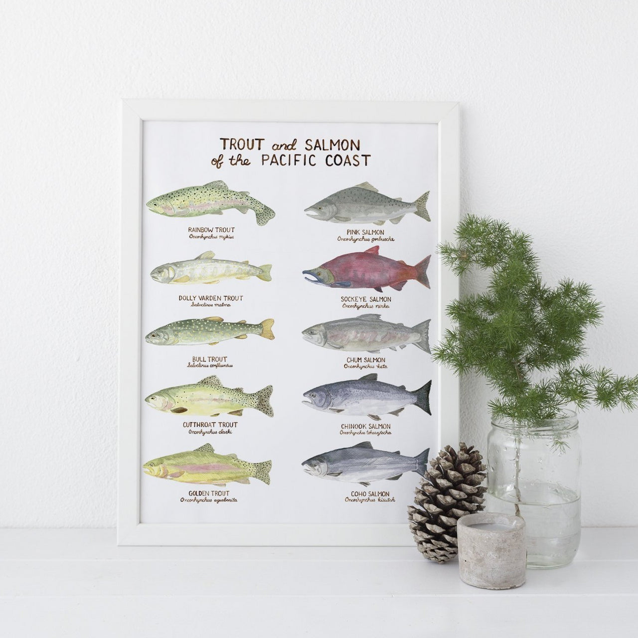 Pacific Trout and Salmon Art Print, Watercolor Art Print