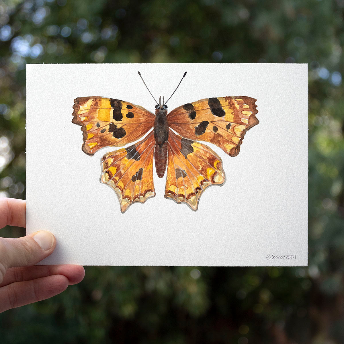 Oreas Anglewing Butterfly Original Watercolor Painting