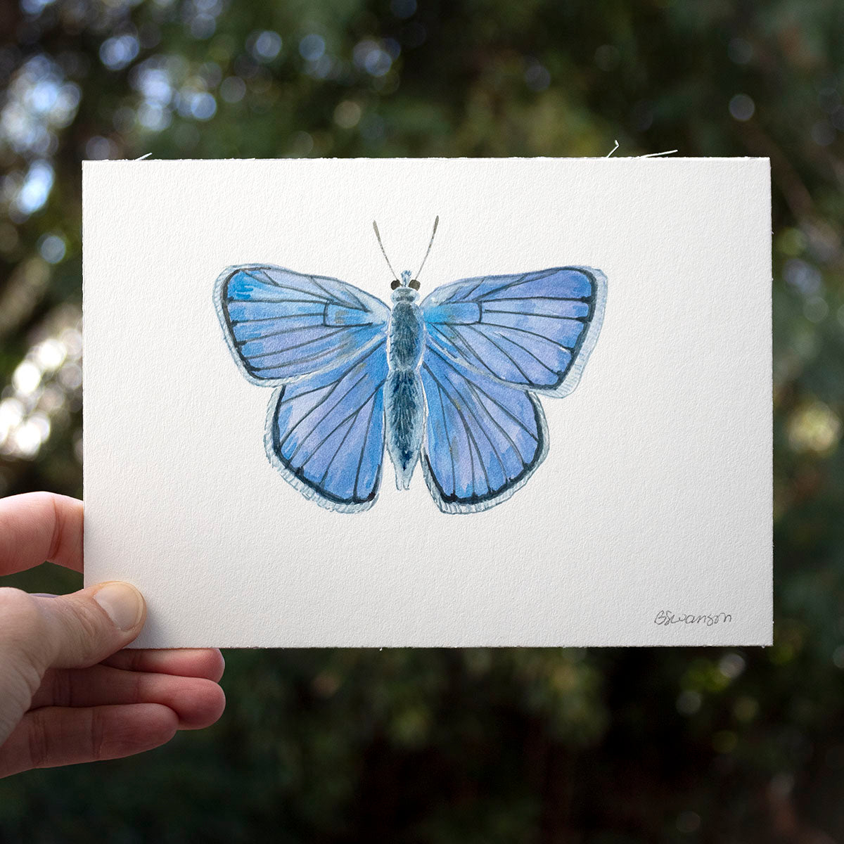 Blue Copper Butterfly Original Watercolor Painting
