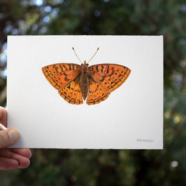 Northwestern Fritillary Butterfly Original Watercolor Painting