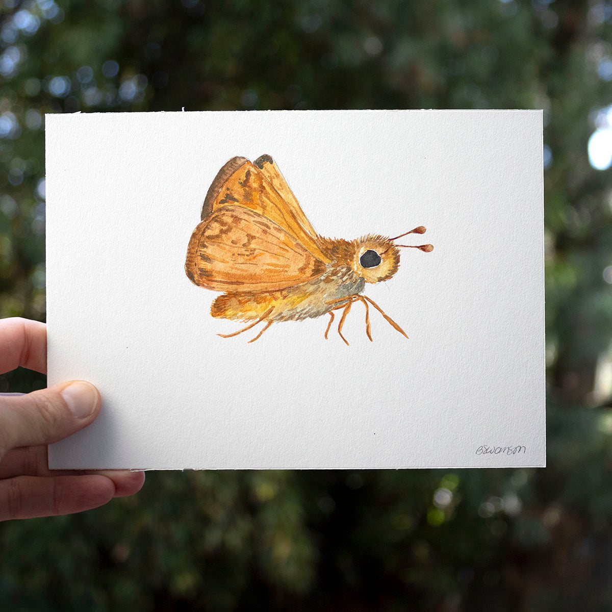 Woodland Skipper Butterfly Original Watercolor Painting