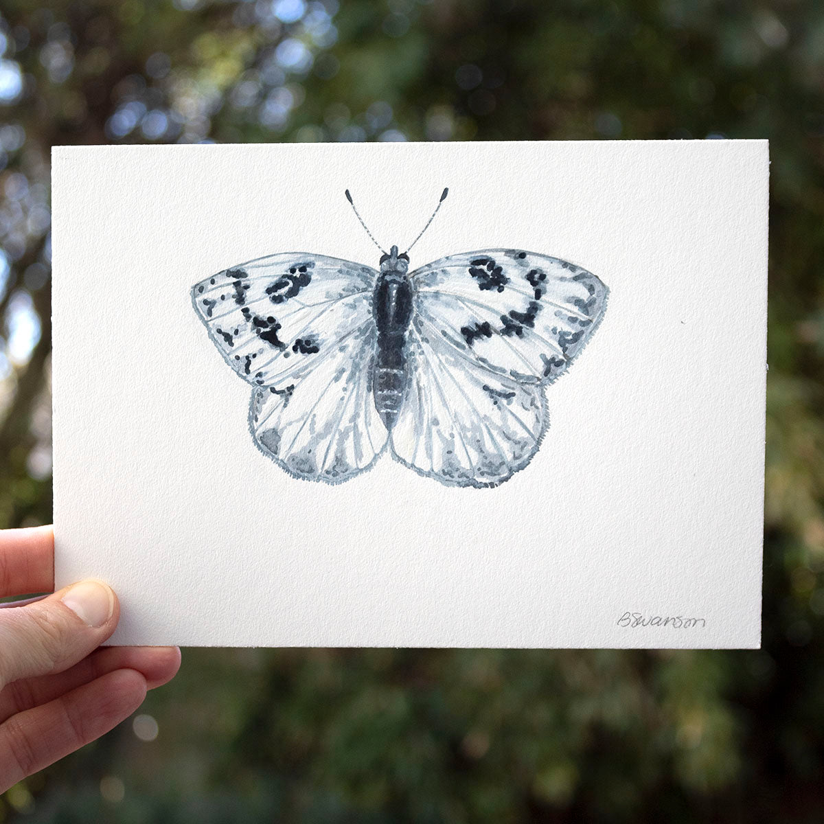Western White Butterfly Original Watercolor Painting