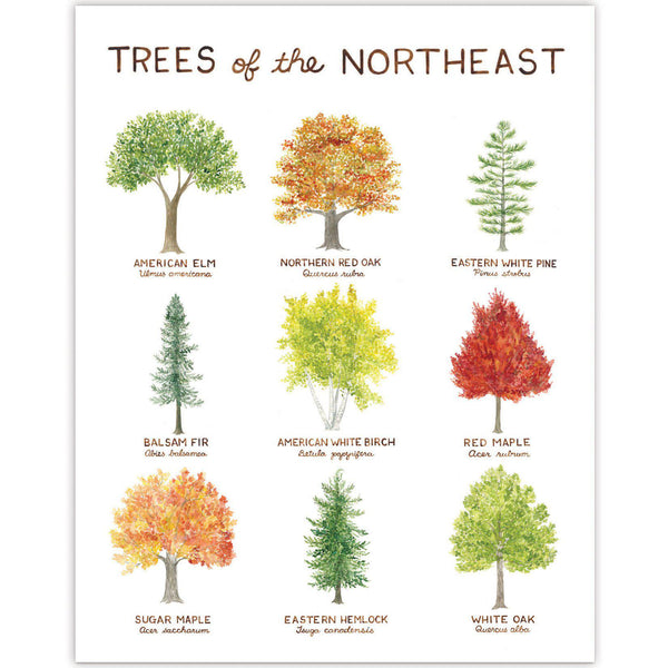 Trees of the Northeast Art Print