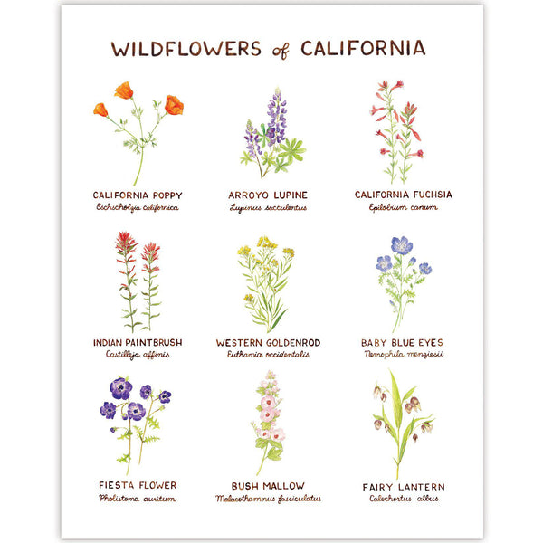 Wildflowers of California Art Print