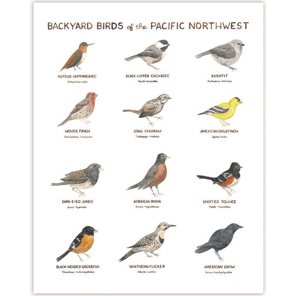 Backyard Birds of the Pacific Northwest Art Print