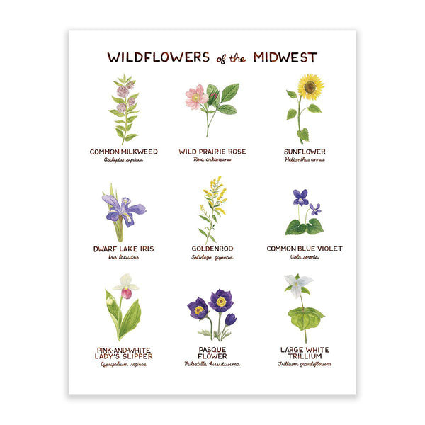 wilflowers of midwest art print