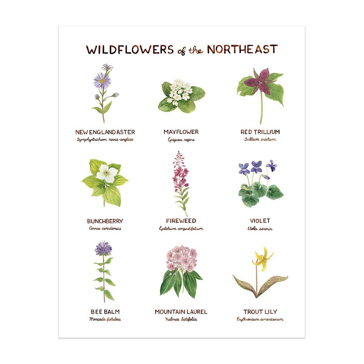 wildflowers of northeast art print