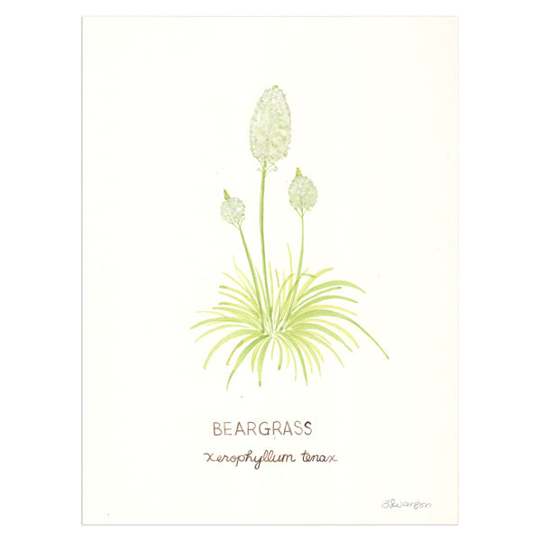 Beargrass Wildflower Original Watercolor Painting