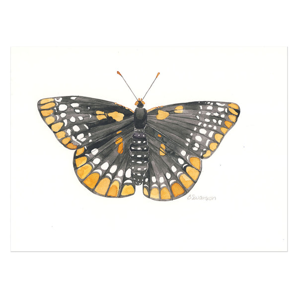 Checkerspot Butterfly Original Watercolor Painting
