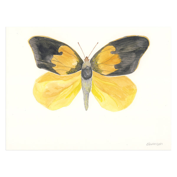 Dogface Butterfly Original Watercolor Painting