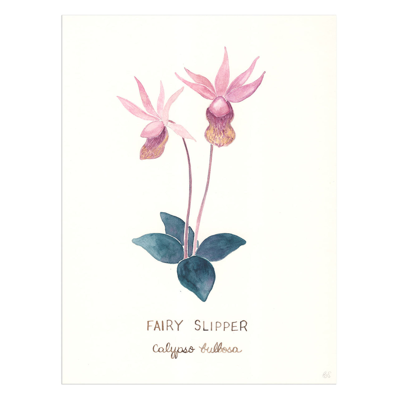 Fairy Slipper Orchid Original Watercolor Painting