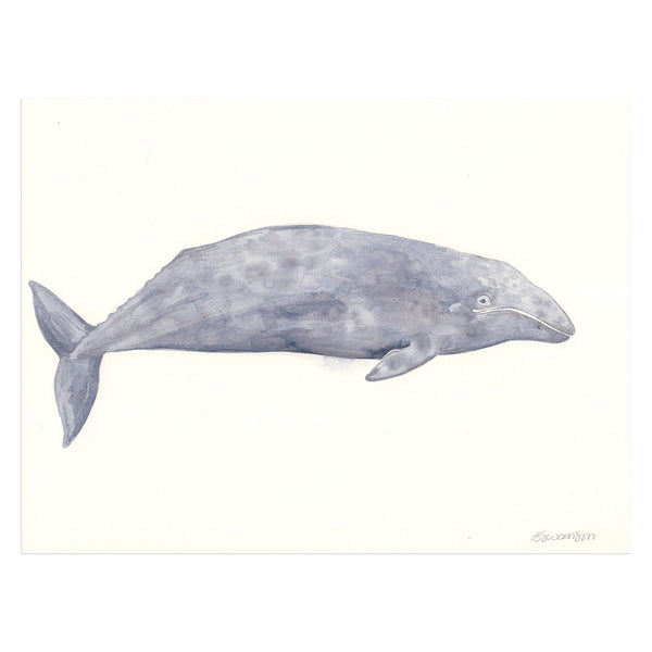 Gray Whale Original Watercolor Painting