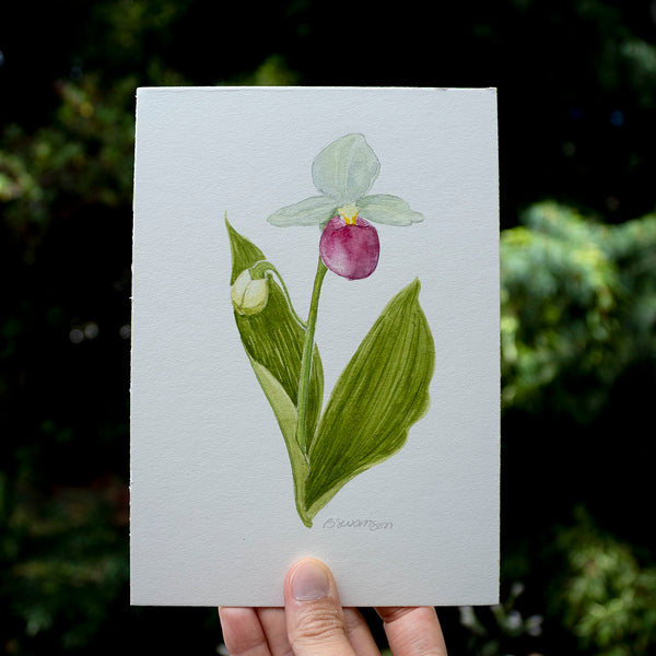 Lady's Slipper Wildflower Original Watercolor Painting