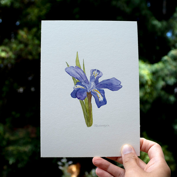 Dwarf Lake Iris Wildflower Original Watercolor Painting