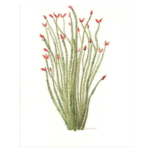Ocotillo Original Watercolor Painting
