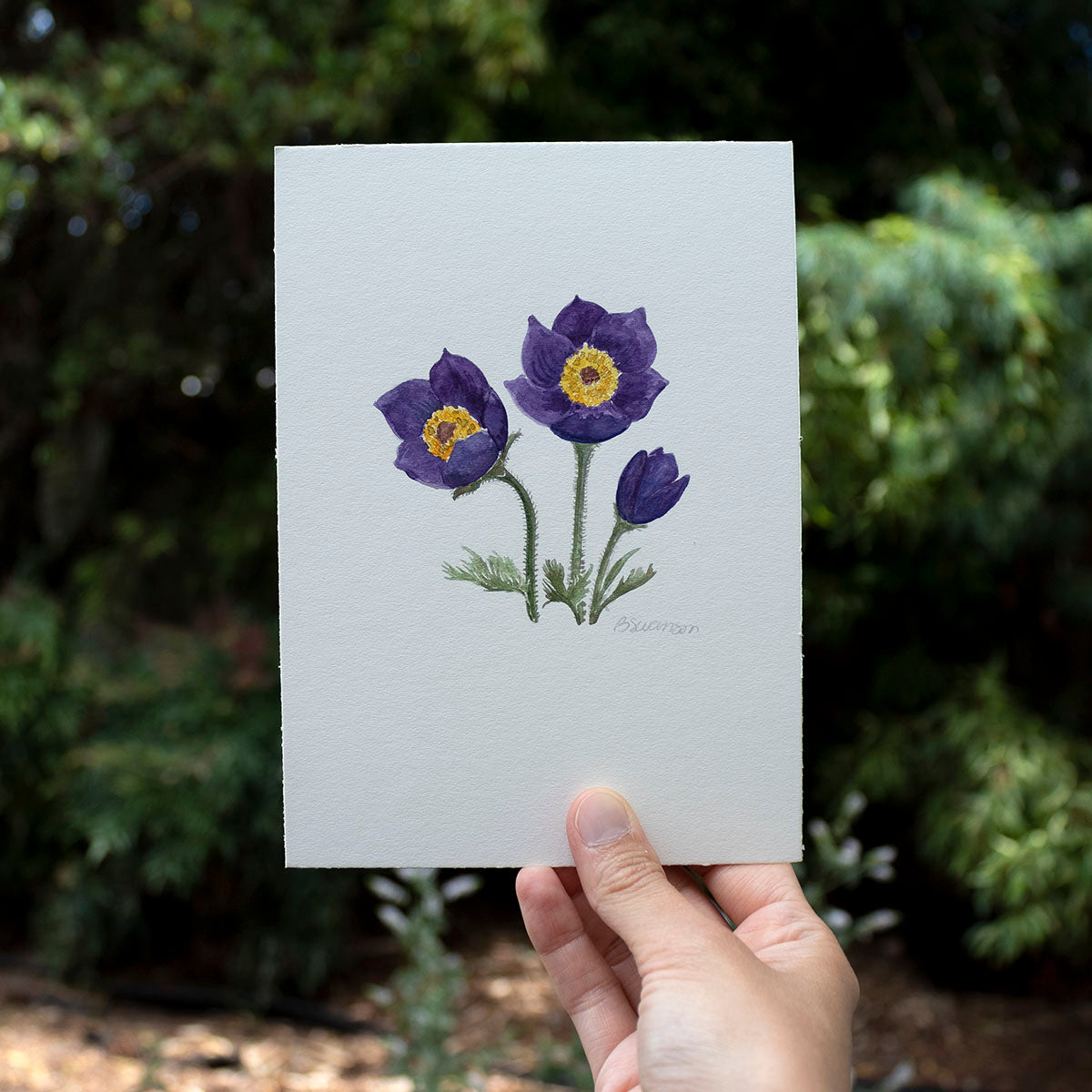 Pasqueflower Wildflower Original Watercolor Painting