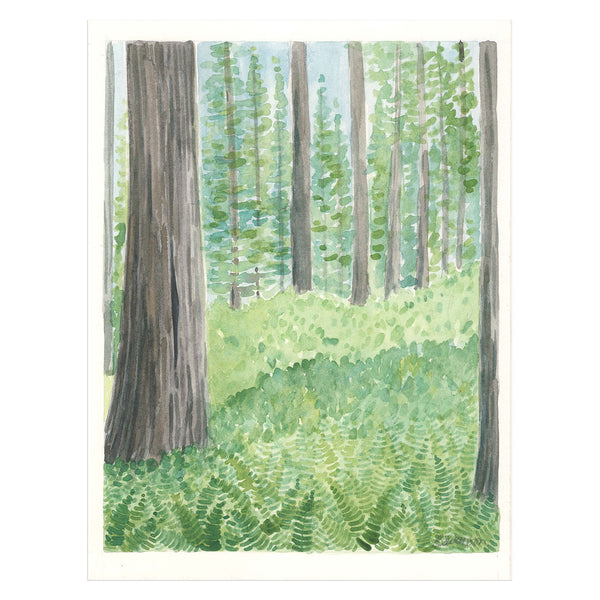Redwood Forest Original Watercolor Painting