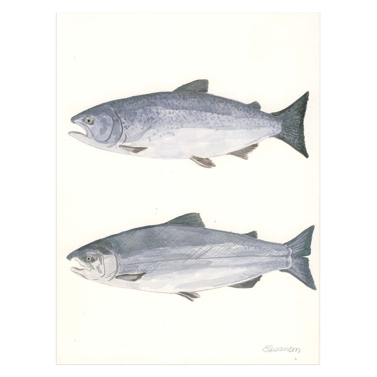 Two Salmon Original Watercolor Painting