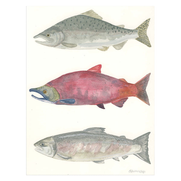 Three Salmon Original Watercolor Painting