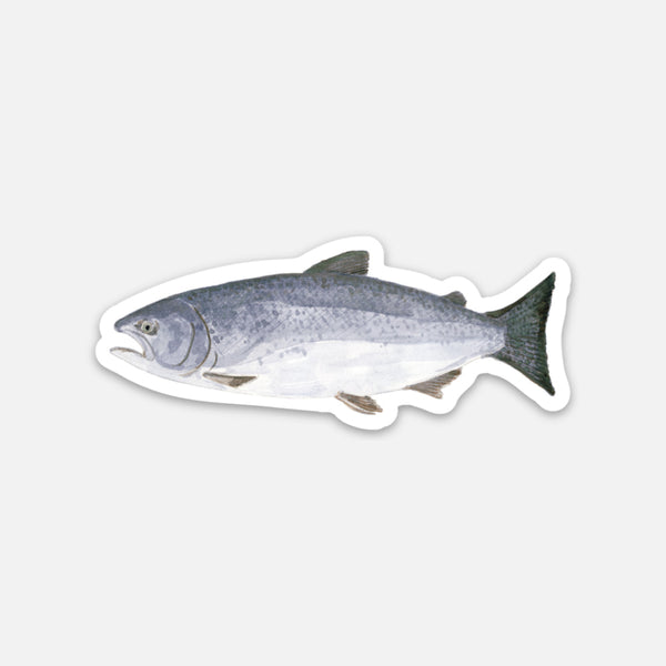 Salmon Sticker