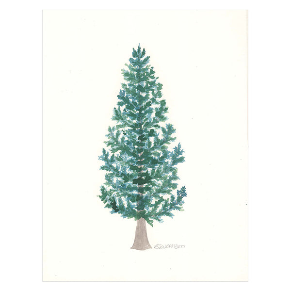 Sitka Spruce Original Watercolor Painting