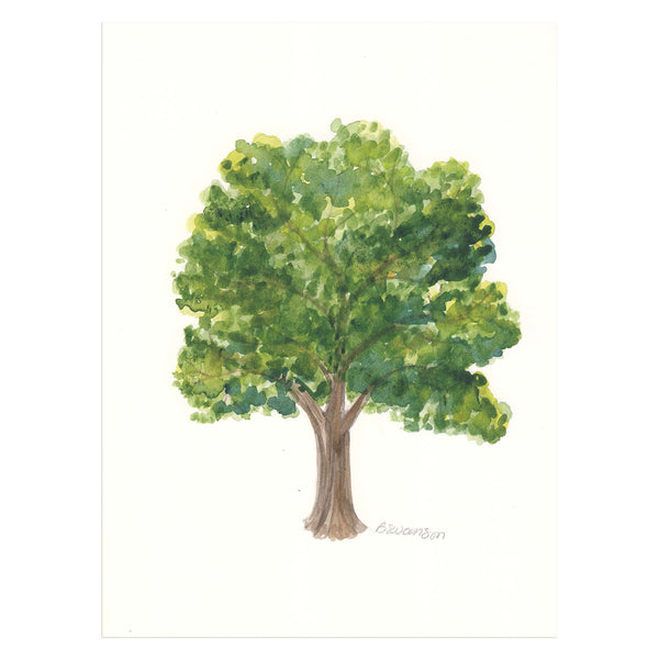 White Oak Original Watercolor Painting