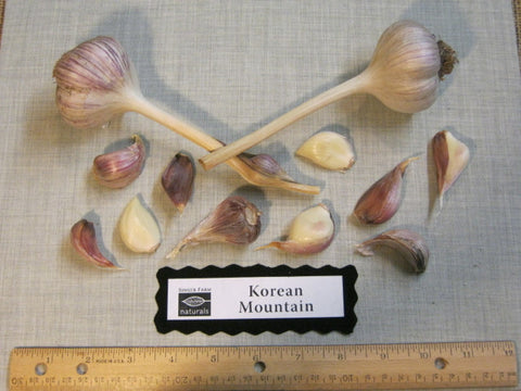 Organic Garlic Korean Mountain