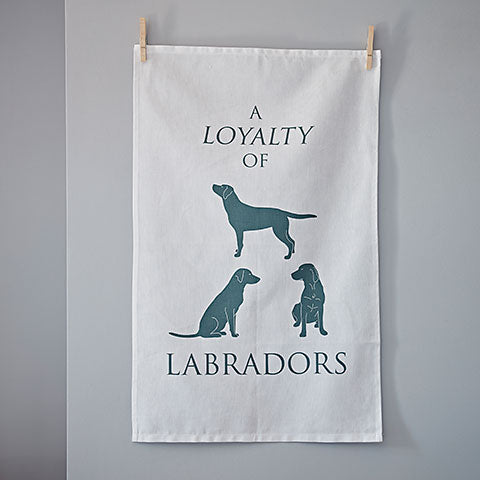 A Loyalty of Labradors - Home and Hound