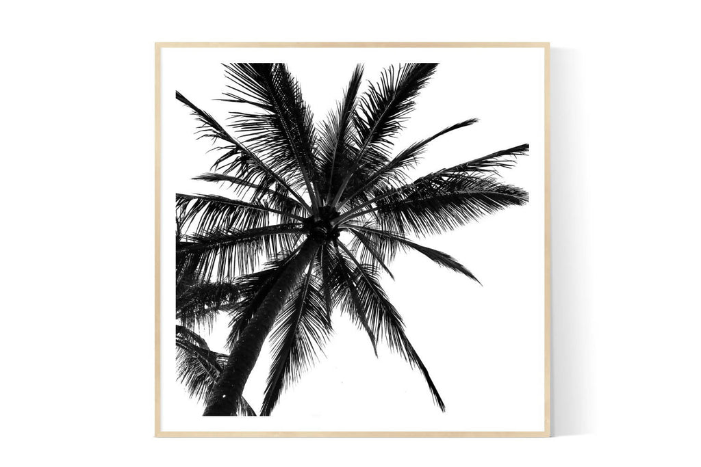 NOOSA PALM | Limited Edition Photographic Art